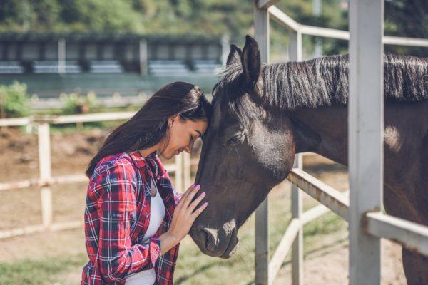 iStock 1047644054 scaled CBD hemp oil for horses
