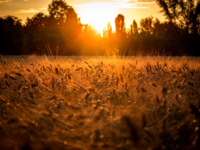 Healthy Roots Hemp Non GMO Farming