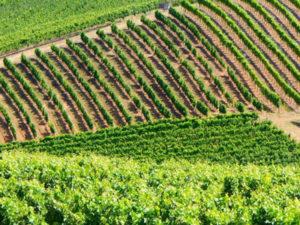 Healthy Roots Hemp Certified Organic Oregon Tilth