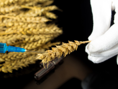 Healthy Roots Hemp Non GMO Lab Testing