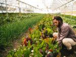 Healthy Roots Hemp Organic Farming